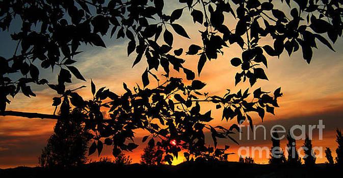 A Dusty Sunset by Janice Westerberg