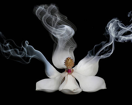Smokin' Magnolia by Lori Hutchison