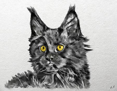 Smoky black kitten Maine Coon by Sergey Lukashin
