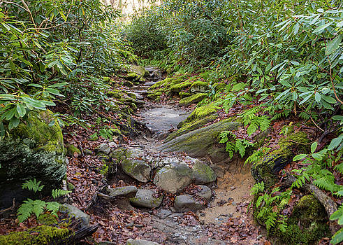 Smoky Mountain Hike  by Tim Fitzwater