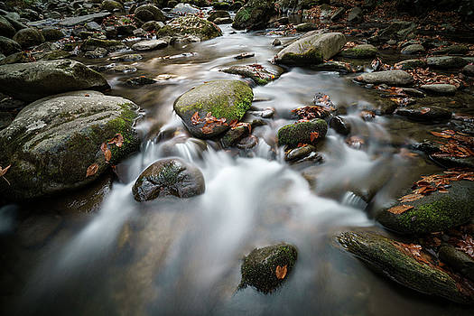 Smoky Mountain Stream by David Morel