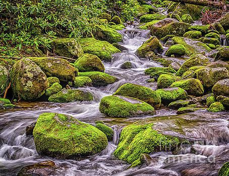 Nick Zelinsky - Smoky Mountain Stream