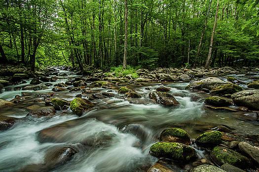 Smoky Mountain Streams by Carol Mellema
