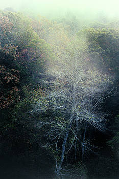Smoky Mountain Trees by David Chasey