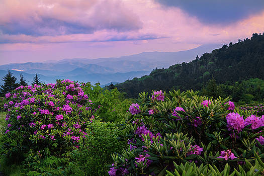 Smoky Mountains and Rhododendrons Roan Mountain by Carol Mellema