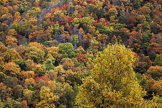 Smoky Mountains Colors by Andrew Soundarajan