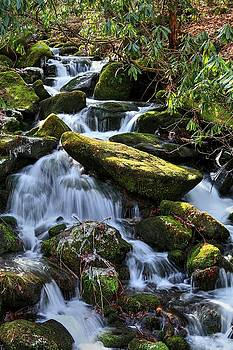 Smoky Mountains Waters III by Carol Montoya