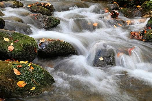 Smoky Mountains Waters In Fall by Carol Montoya