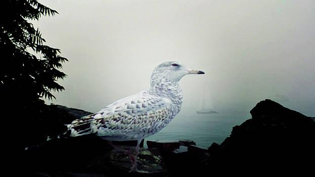 Mike Breau - Smug Seagull from Maine U.S.A.