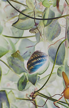 Snail by Cynthia Saliba