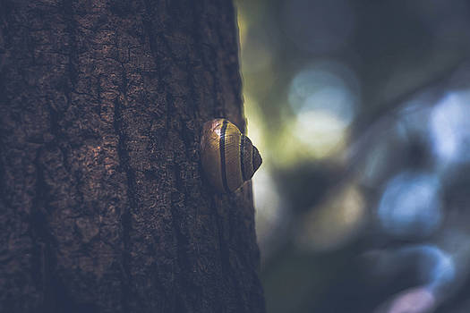 Snail in tree by Mohamed Nabouli