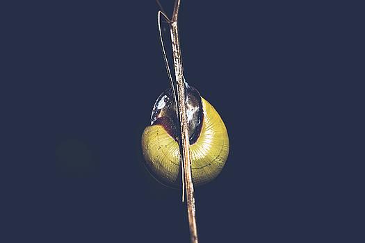 Snail by Mohamed Nabouli
