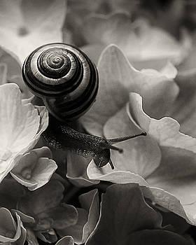 Snail on Hydrangea by Joseph Duba