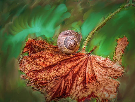 Snail on leaf #h2 by Leif Sohlman