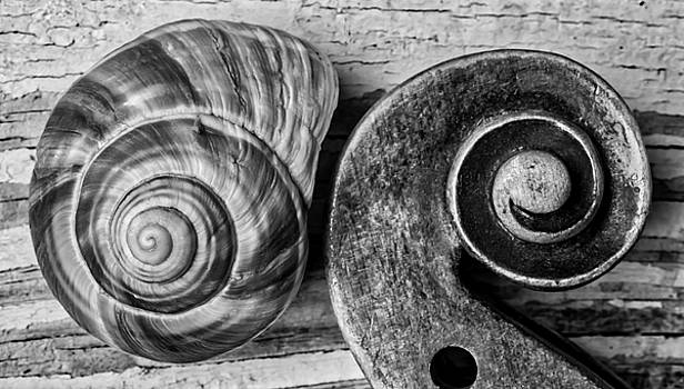 Snail Shell And Violin Scroll by Garry Gay