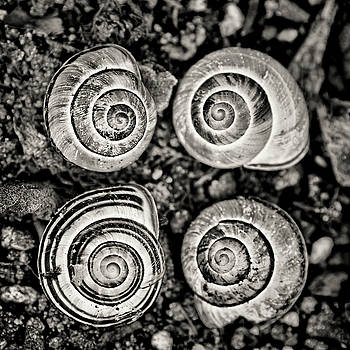Peggy Collins - Snail Shells Black and White