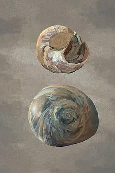 Snails by Jeff Oates Photography