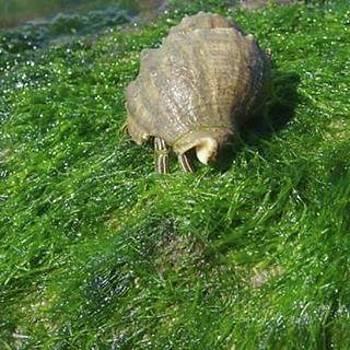 Snail's Pace by Barbie Reno