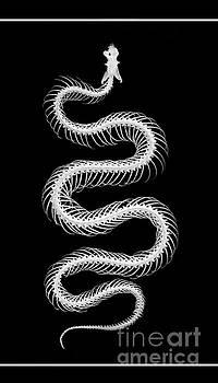 Snake Skeleton by Lynn Jackson