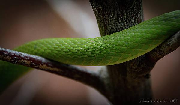 Snake Skin by Henri Irizarri