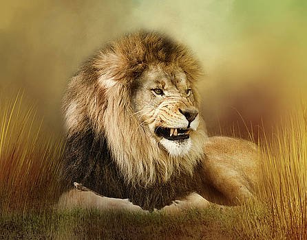 Snarling Lion by TnBackroadsPhotos