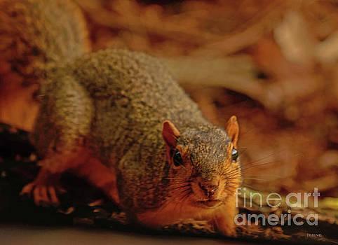 Snooping Squirrel by Diane Friend