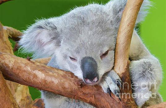 Snoozing Koala Bear by Kathy Baccari
