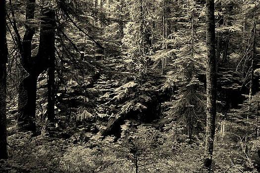 Rosanne Jordan - Snoqualmie Forest