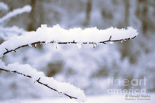 Snow 1 by Ronald Hoehn