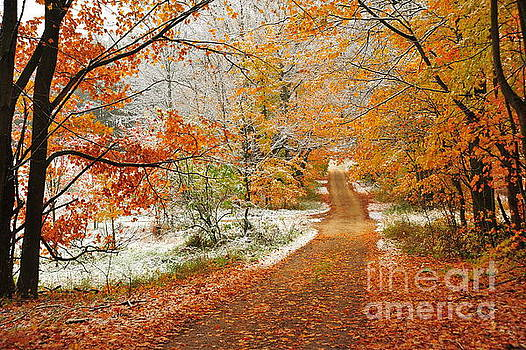 Terri Gostola - Snow Along Autumn Tree Tunnel