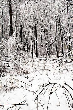 Snow by Amanda Kiplinger