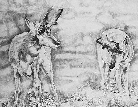 Snow and Sage- Pronghorn by Susie Gordon