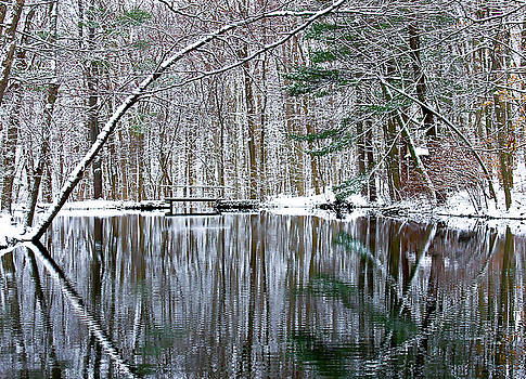Snow and  Tree reflection by Chris Burke