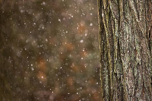 Terry DeLuco - Snow and Tree Trunk