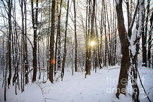 Snow and Trees by Alana Ranney