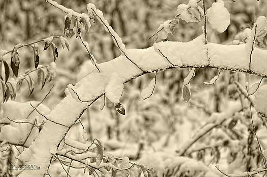 LeeAnn McLaneGoetz McLaneGoetzStudioLLCcom - Snow Arch