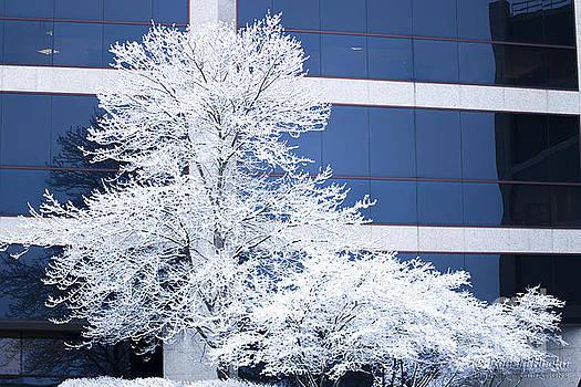 Snow Art by Ronald Hoehn