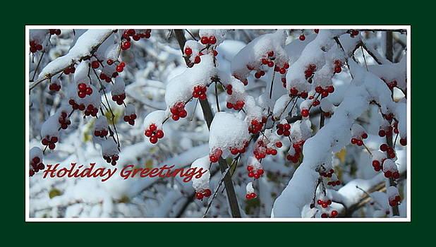 Rosanne Jordan - Snow Berries Holiday Greeting