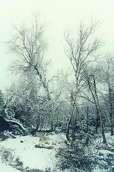 Snow Birch by Dorit Fuhg