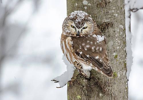 Snow Bird by Joy McAdams