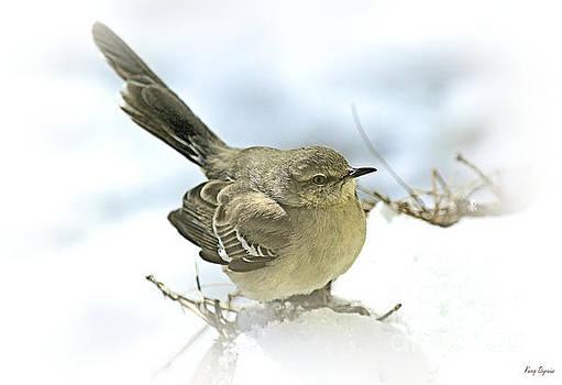 Snow Bird by Karry Degruise