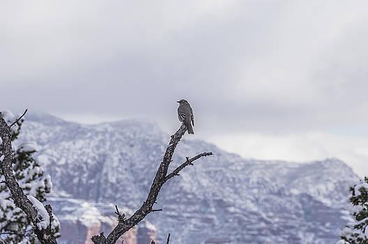 Snow Bird by Laura Pratt