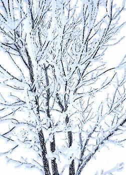 Snow blossom by Wonju Hulse