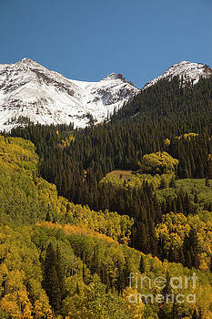 Snow Cap and Aspens by Timothy Johnson