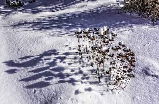 Snow Caps by Gary Shepard