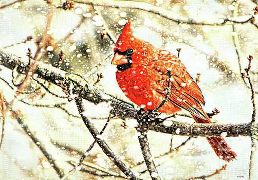 Snow Cardinal by Tina LeCour
