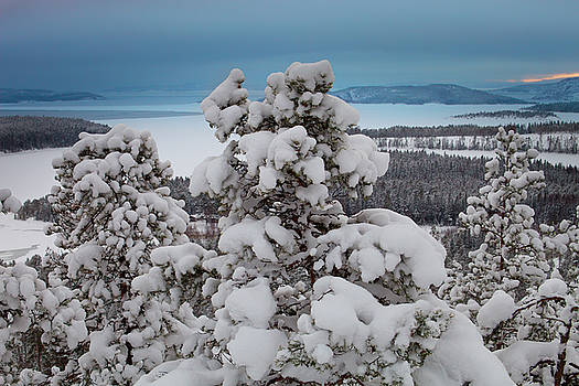 Snow clad pine trees overlooking a bay of the Baltic Sea by Ulrich Kunst And Bettina Scheidulin