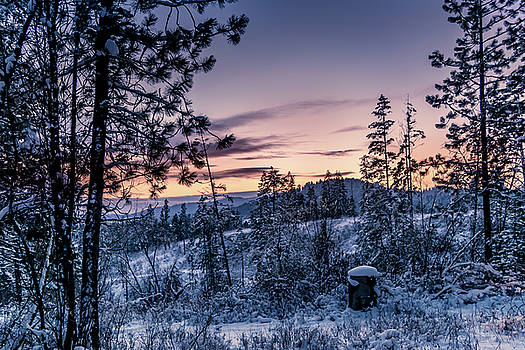 Snow Coved Trees and Sunset by Lester Plank