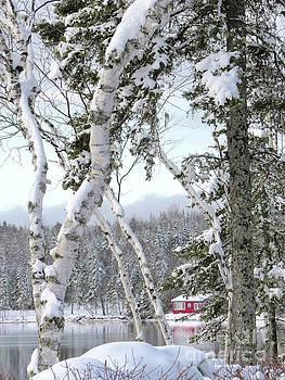 Snow cover by Brenda Ketch