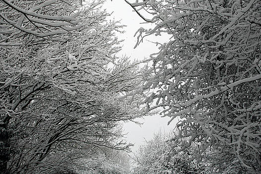 Snow Covered Branches 01 by Jason Moore